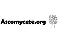 Photo de Ascomycete.org